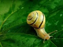 Snail 06