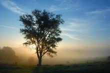 A Tree Is In Fog