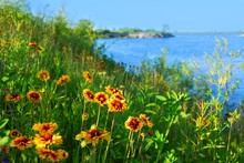 Wild Flowers On Seashore