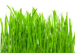 Leinwandbild Motiv fresh grass with dew drops
