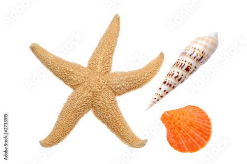 seashells and starfish Wallpaper Mural