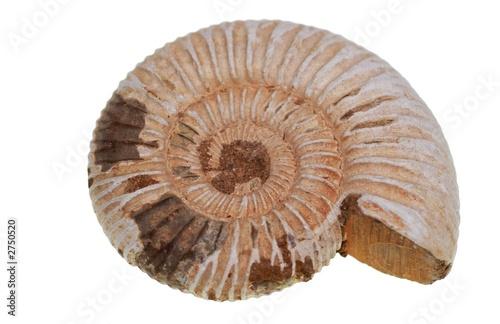 Photo fossile