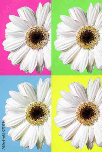 Fotorollo basic - gerbera selection (von Kitch Bain)