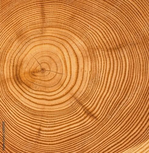 Papiers peints Bois wooden cut texture