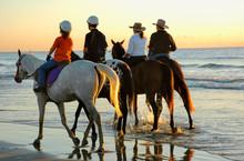 Excercising Horses At Daybreak...