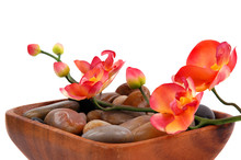 Orchid And Pebbles