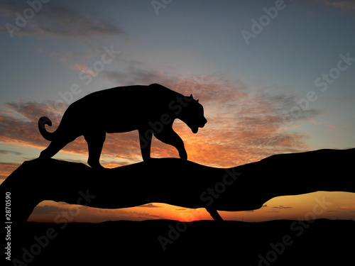 Photo Stands Panther silhouette of leopard on tree
