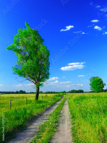 Poster Green beautiful summer landscape