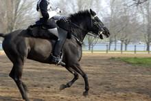 Horse Guard #5