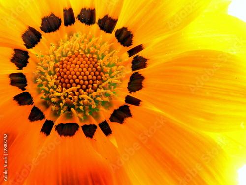 Obraz na plátně  inside flower