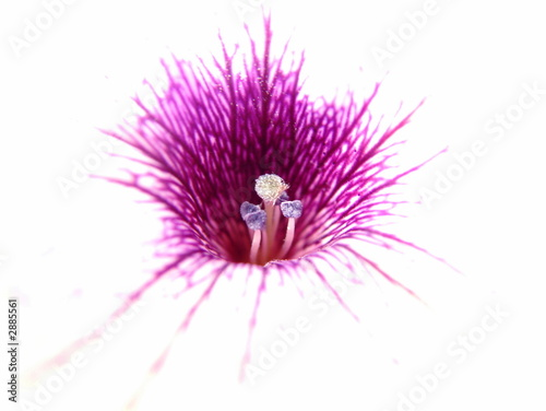 Fotografie, Obraz inside white flower