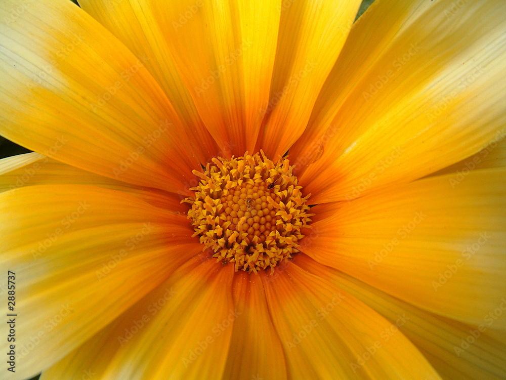 Fotografie, Obraz  inside flower