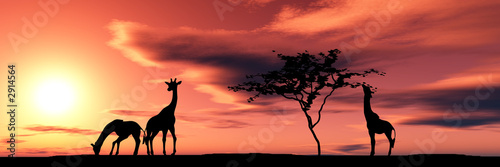Canvas Prints Coral family of giraffes