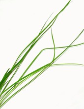 Brins D'herbes