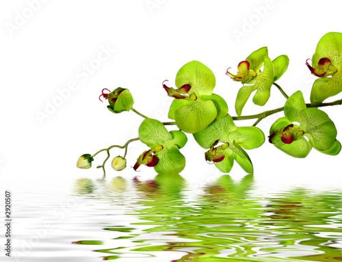 Doppelrollo mit Motiv - beautiful orchid