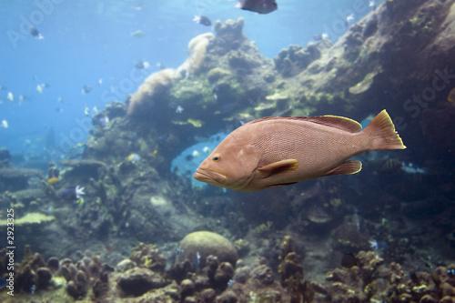 Poster Sous-marin coddfish