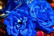 canvas print picture - blue roses