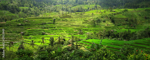 rice terraces, bali, indonesia
