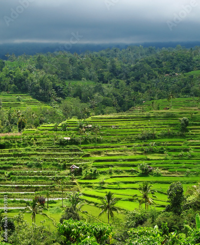In de dag Lime groen rice terraces under a stormy sky, bali, indonesia