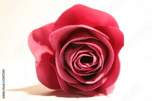 canvas print motiv - LittleSnowman : rose