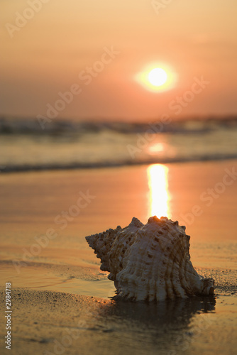 Seashell on beach. - 2984718