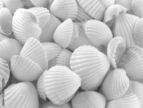 Doppelrollo mit Motiv - sea shells (von DLeonis)