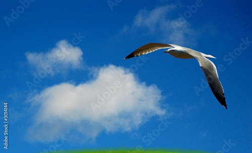 Fotografie, Obraz  oiseau