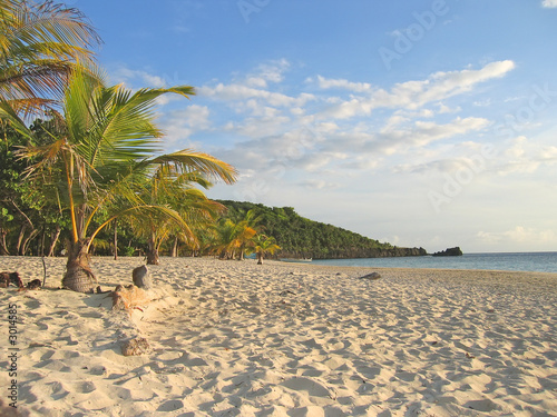 tropical caraibe beach with palm trees and white sand, roatan is #3014585