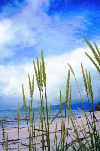 Foto-Leinwand - summer beach