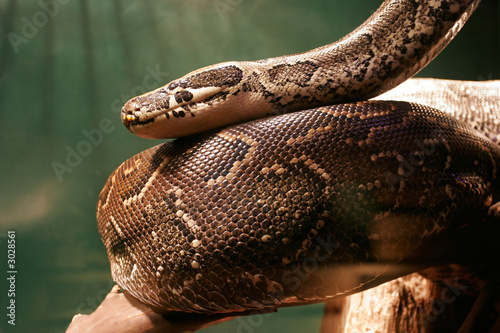 Photo huge boa constrictor in jungle
