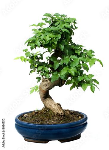 Foto-Kissen - bonsai tree