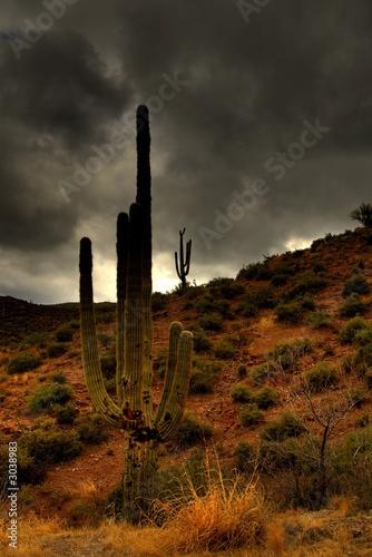Poster de jardin Desert de sable desert saguaro storm