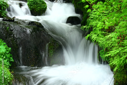 Wall Murals Waterfalls wahkeena falls