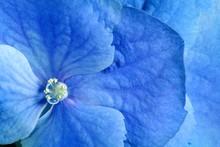 Beauty Blue Flower