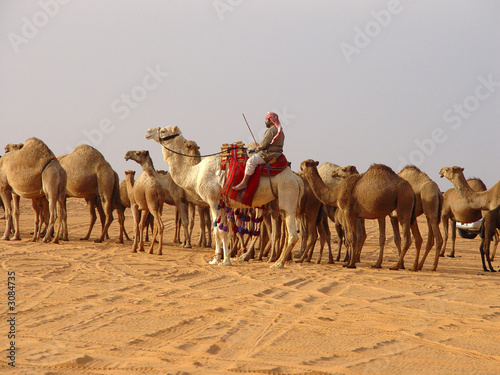 Photo  camels