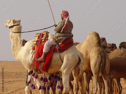 Fotografija  man&camel