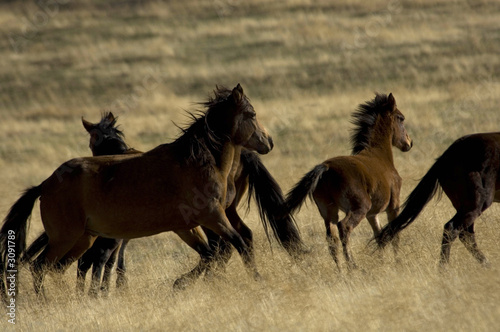Wall Murals Photo of the day wild horses about to run