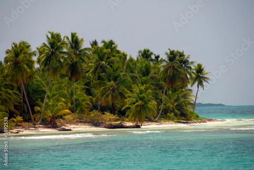 Poster Tropical plage palmenstrand