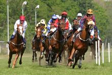 Horses At Racetrack