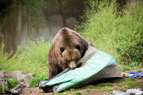 Photo  bear camp