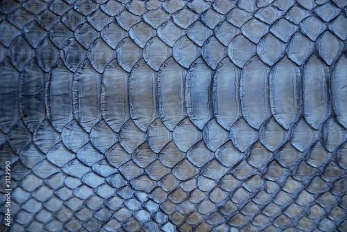 Foto auf Leinwand Texturen blue snake