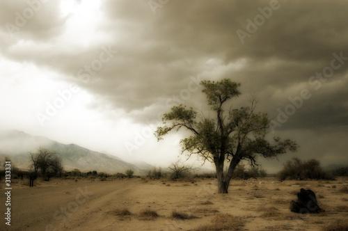 Staande foto Afrika storm/tree