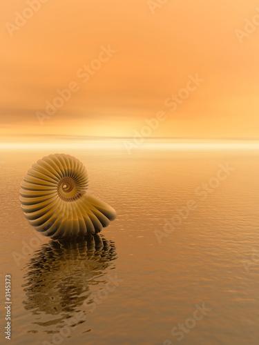 Canvas-taulu shell