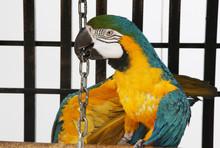 Tricky Macaw