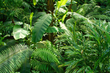 Fototapetatropical jungle