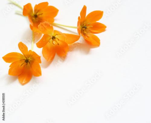 Foto-Leinwand ohne Rahmen - small spring bouquet (von Julia Britvich)