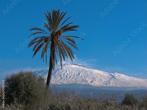 Foto  paesaggio etna con palma