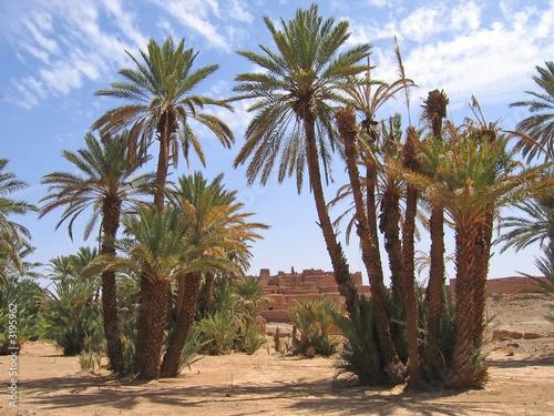 Fotografija desert oasis with palm trees, zagora, draa valley, morocco