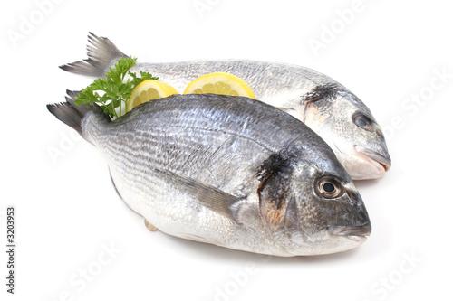 Fotografía  dorada fish