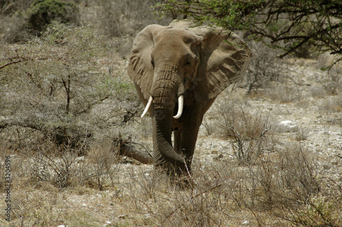 Photo Stands Elephant african elephant